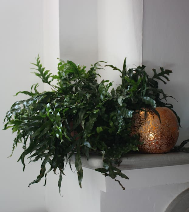 Angolo camino: Sala da pranzo in stile  di Tiziano Codiferro -  Master Gardener