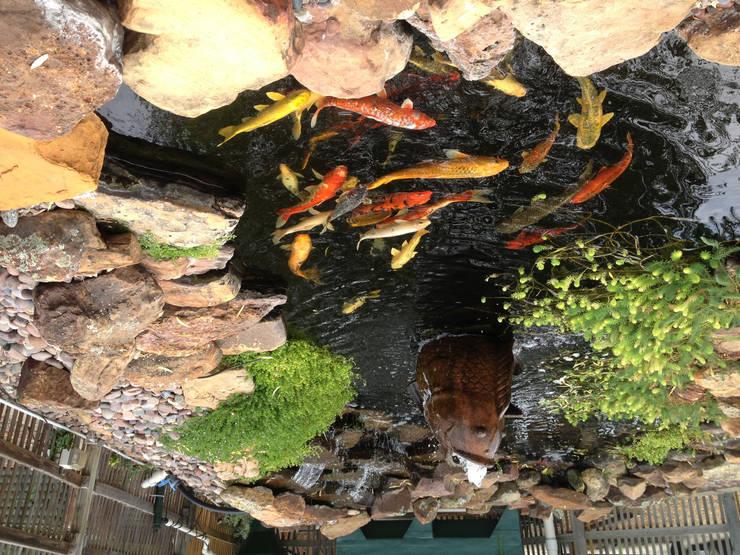 Bio Göl Havuz (Biyolojik Gölet ve Havuz Yapısalları) – Koi Havuzu:  tarz Bahçe, Kırsal/Country