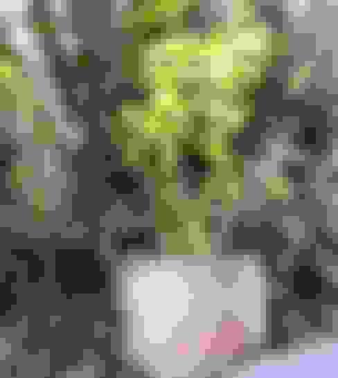 Jardins  por homify