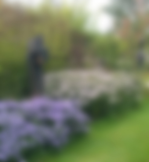 sfghsfgh:  Tuin door BANY International B.V.