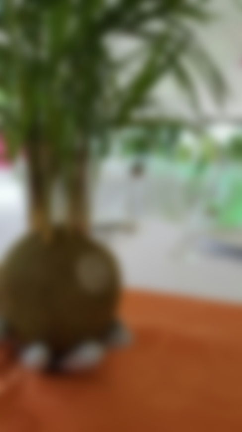 室內景觀 by ZoeDecco