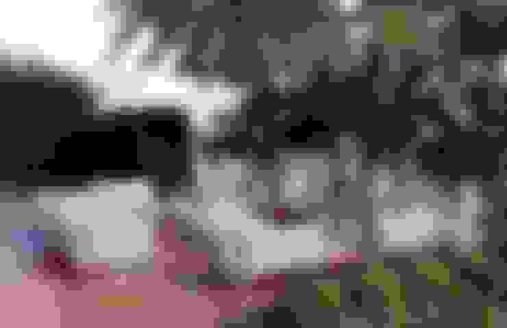 HANDE KOKSAL INTERIORS – House E - E Evi:  tarz Teras