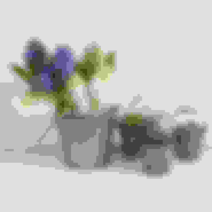 Garten von Lilac Coast