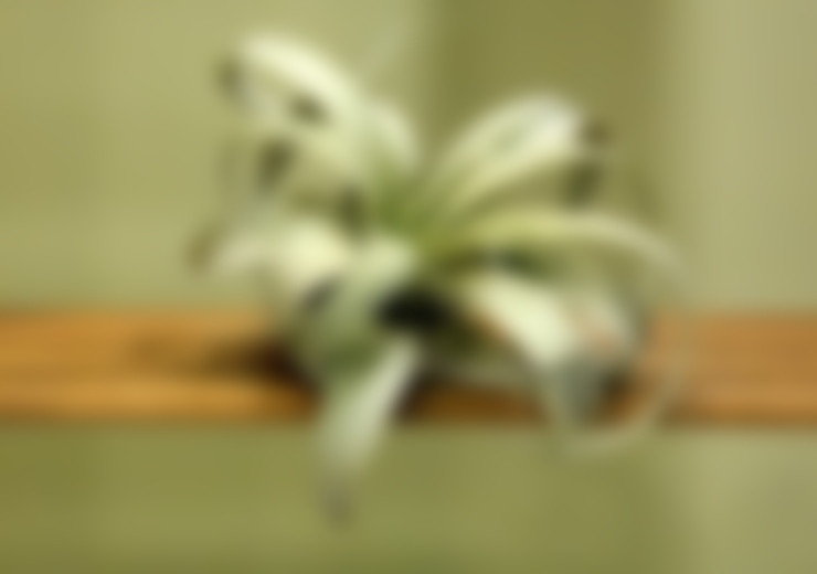 Jardines de estilo  por bitki dekor