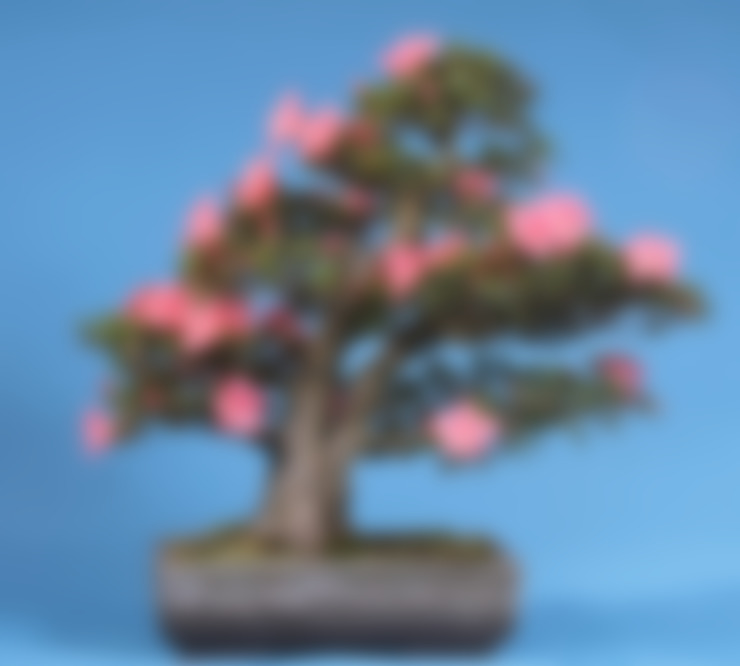 Сад  в . Автор – Bonsai-Shopping