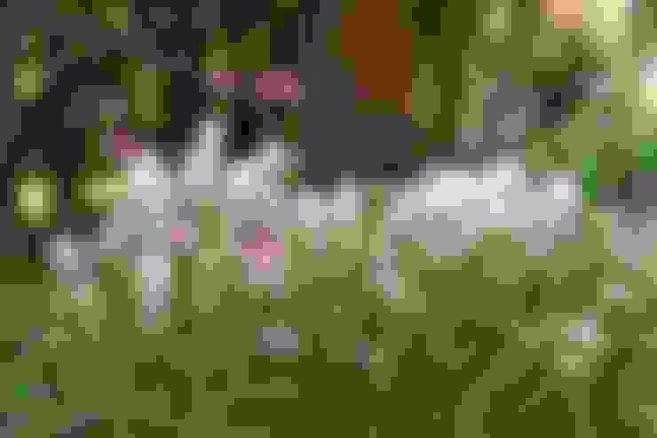 Jardines de estilo  por Carla Wilhelm