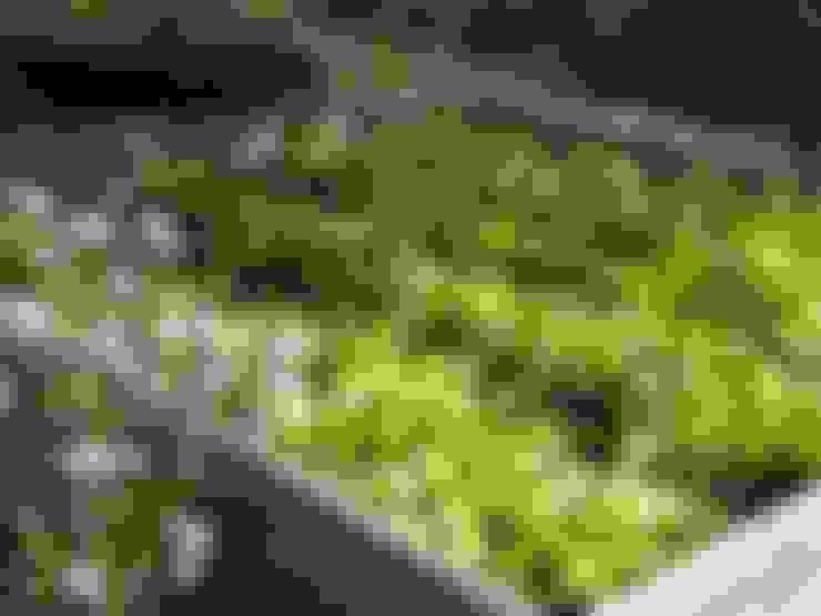Projekty,  Ogród zaprojektowane przez Carla Wilhelm