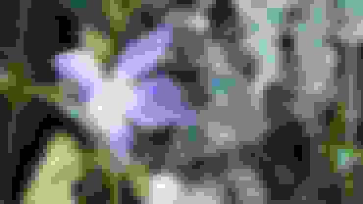 Jardines de estilo  por Vertical Flore