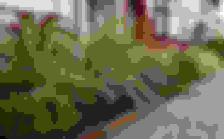 Jardines de estilo  por Tom Massey Landscape & Garden Design