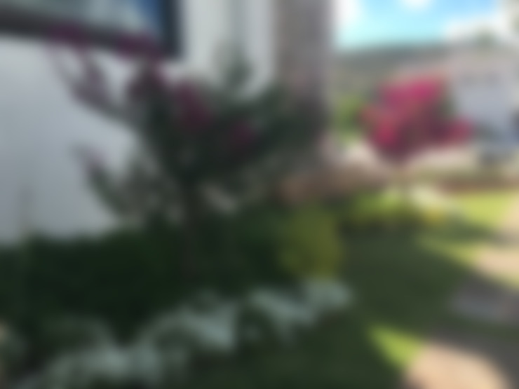 Jardines de estilo  por SCH2laap arquitectura + paisajismo