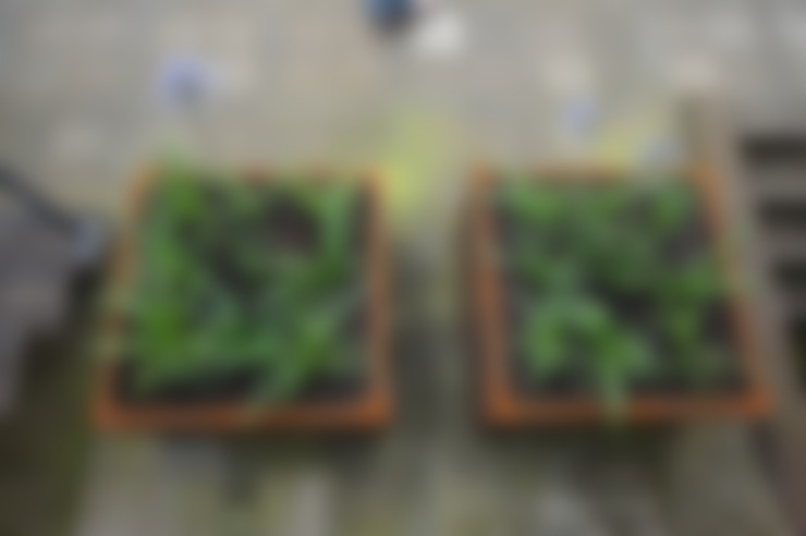 Jardines de estilo  por BMT