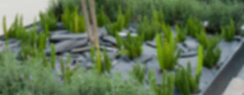 17 ideas para arreglar tu jard n con poco dinero for Ideas para arreglar tu jardin
