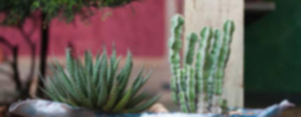 Mini-Jardins :   por Luiza Soares - Paisagismo