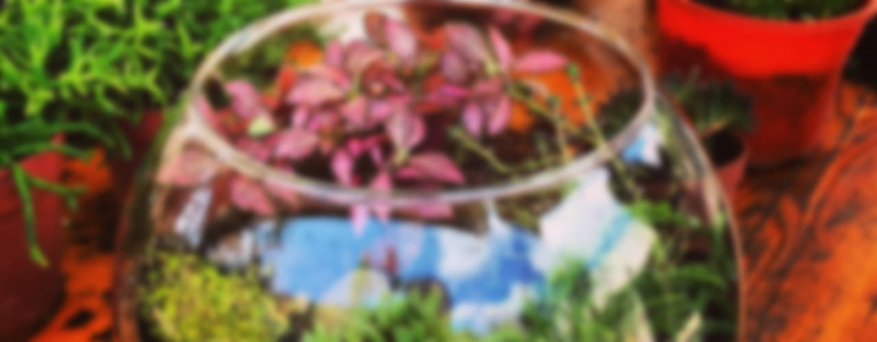 Terrariums Ece Botanik