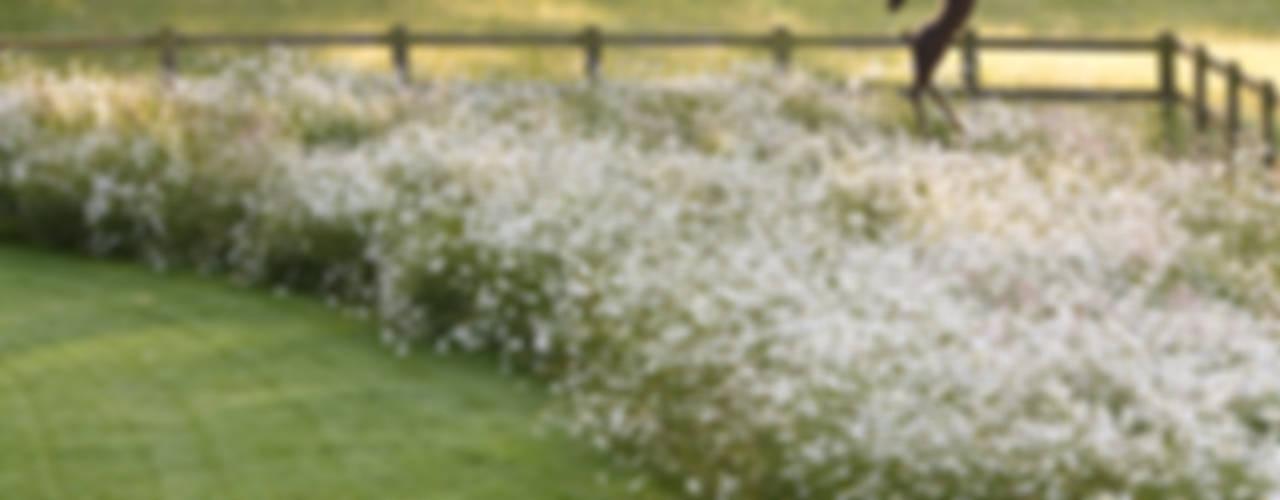 door Catherine Thomas Landscape & Garden Design Ltd,