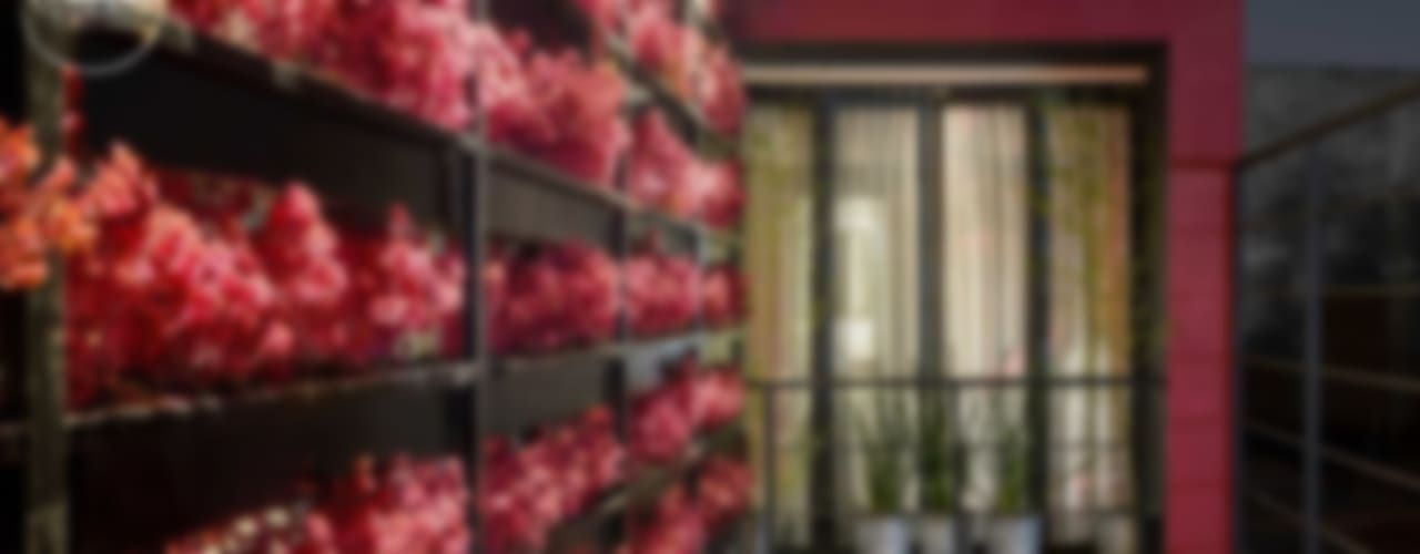 モダンな庭 の Boutique de Arquitectura (Sonotectura + Refaccionaria) モダン