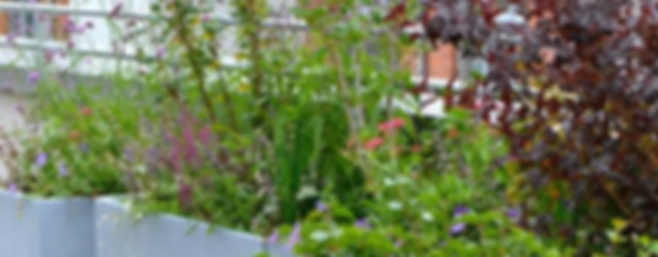 Dachterrasse und Dachgarten in Berlin Balkon, Veranda & Terrasse von Nelka