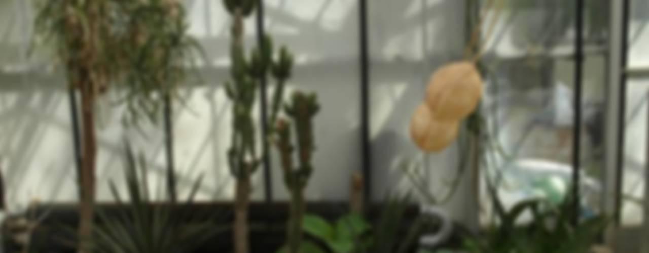 Jardines de invierno de estilo ecléctico de Artgraine Ecléctico