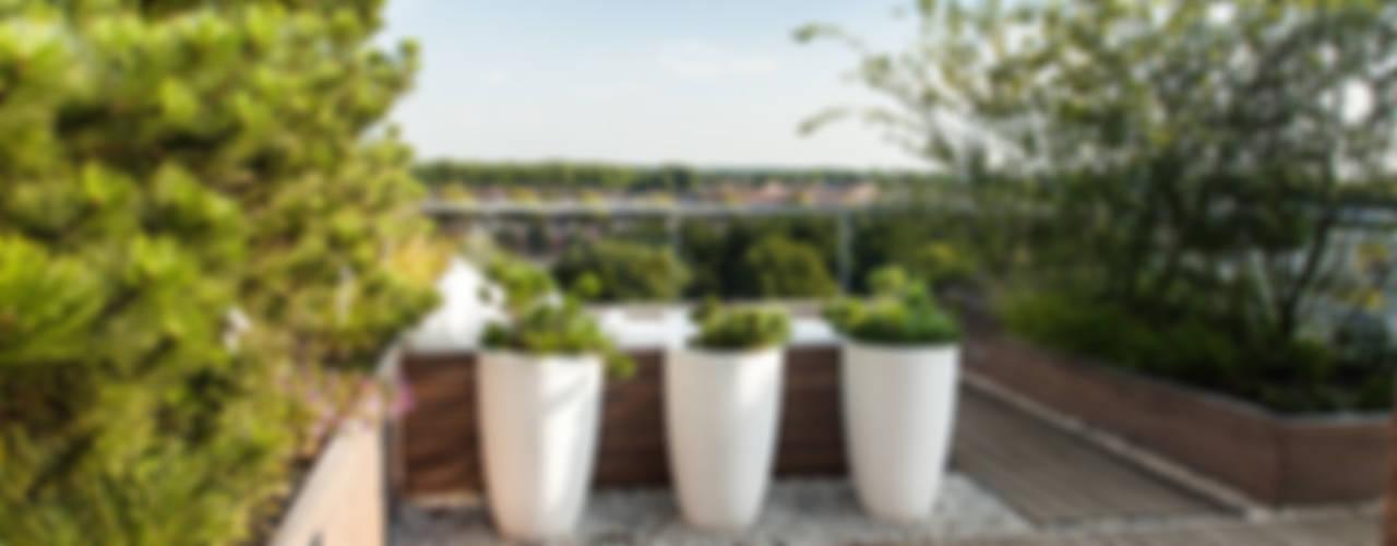 Balcon, Veranda & Terrasse modernes par Studio REDD exclusieve tuinen Moderne