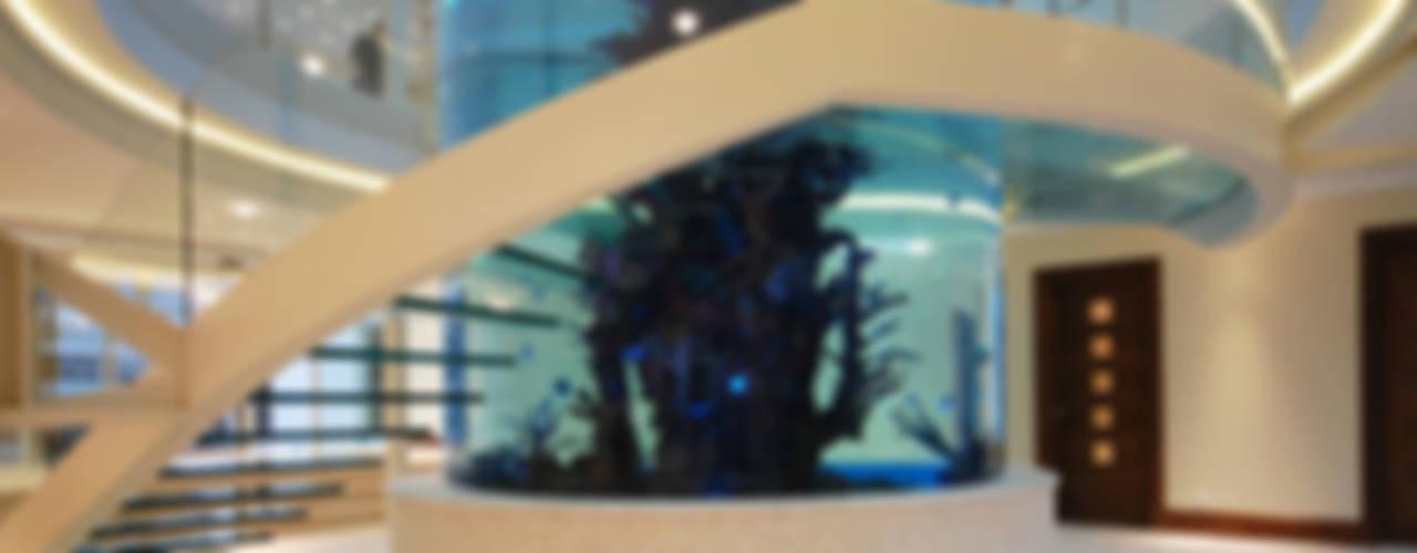 Helical glass staircase around giant fish tank الممر الحديث، المدخل و الدرج من Diapo حداثي