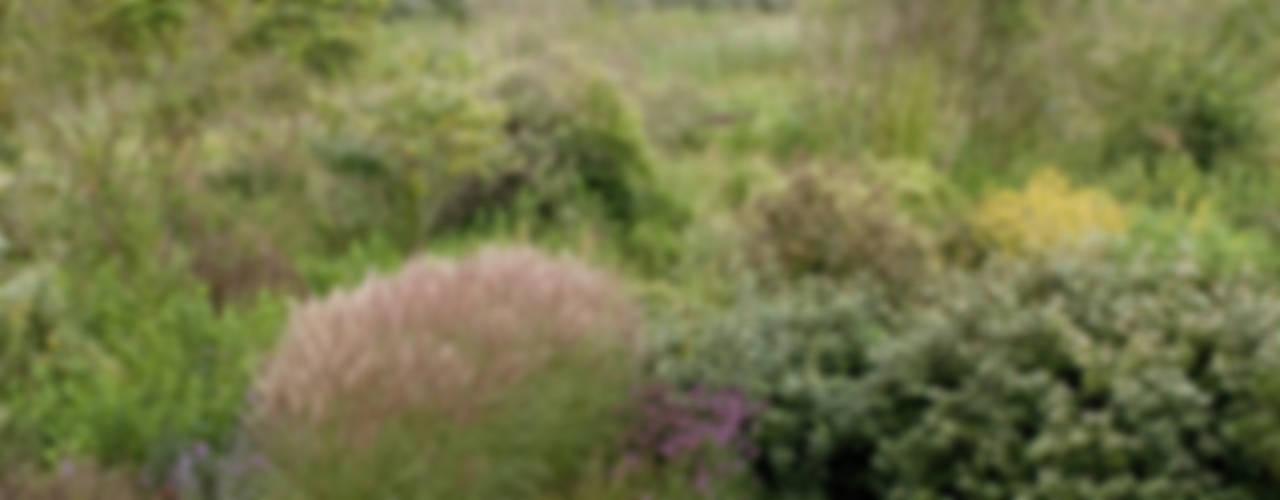 Dune garden Katwijk Holland 根據 Andrew van Egmond (ontwerp van tuin en landschap) 現代風