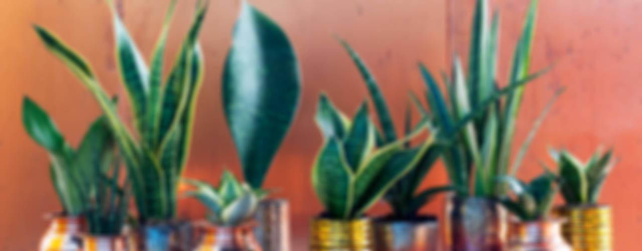Pflanzenfreude.de: modern tarz , Modern