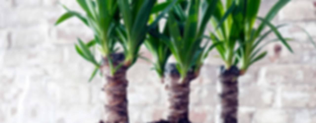 Die Yucca - Zimmerpflanze des Monats Januar: industriell  von Pflanzenfreude.de,Industrial