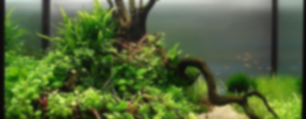 Аквариум природный от Аквариумный салон 'Мир за стеклом' Тропический