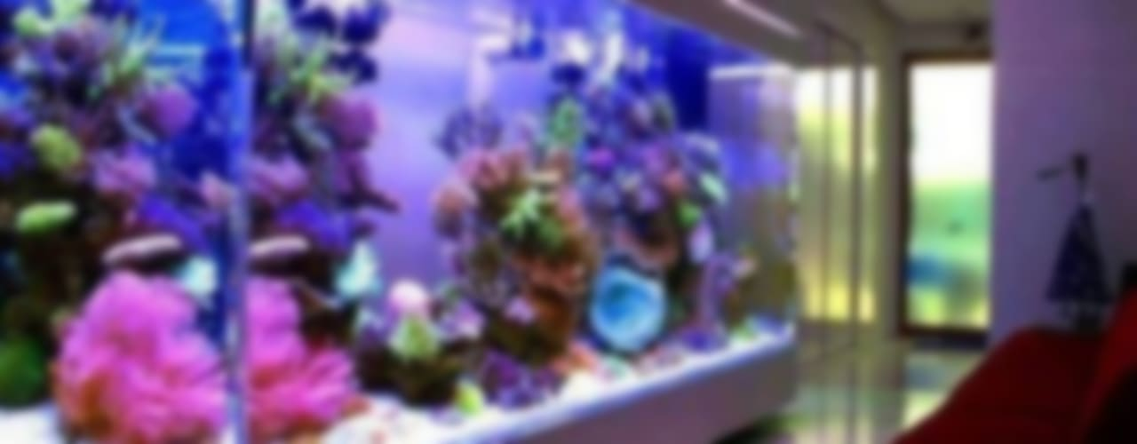 di Аквариумный салон 'Мир за стеклом' Tropicale