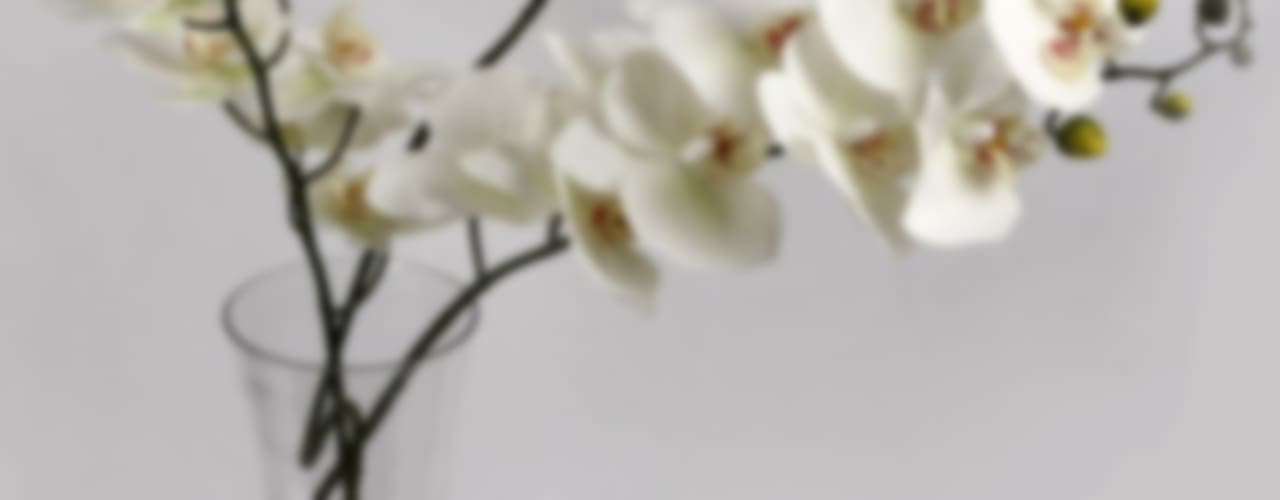 Flowers - Orchids and Lily: minimalist  by Uberlyfe,Minimalist