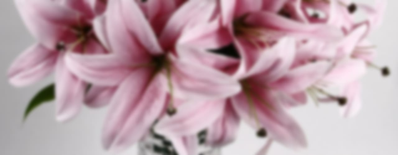 Flowers - Orchids and Lily:   by Uberlyfe