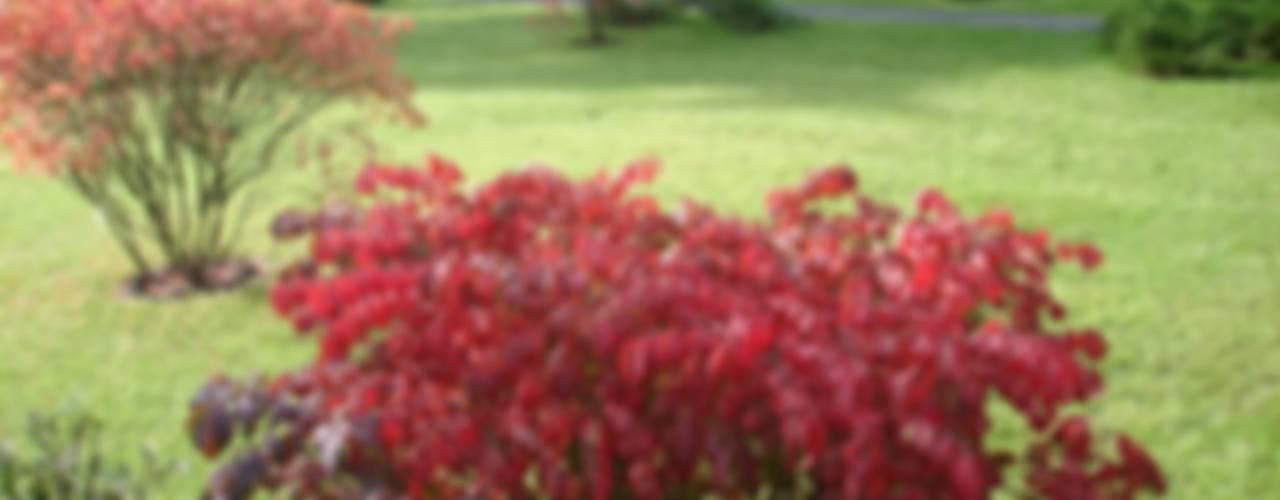 Огонек : Сады в . Автор – ПАН Ландшафт,