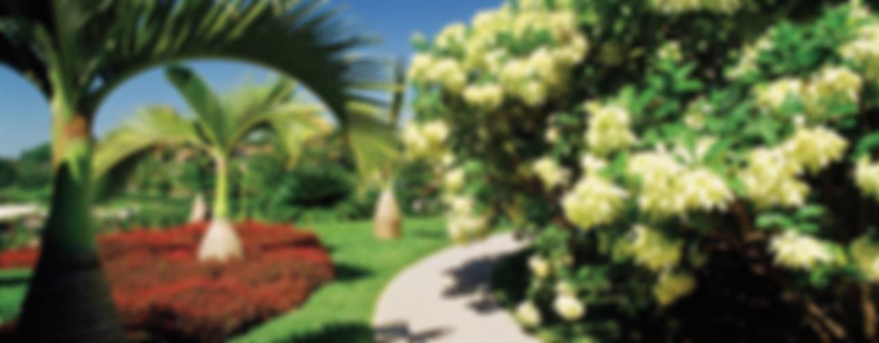 Сад в тропическом стиле от Marcelo Novaes Paisagismo Тропический