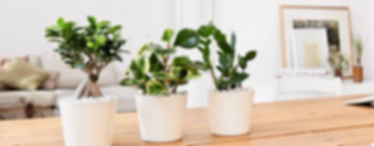 Der grüne Daumen für Zuhause von EVRGREEN Vertriebs GmbH Landhaus