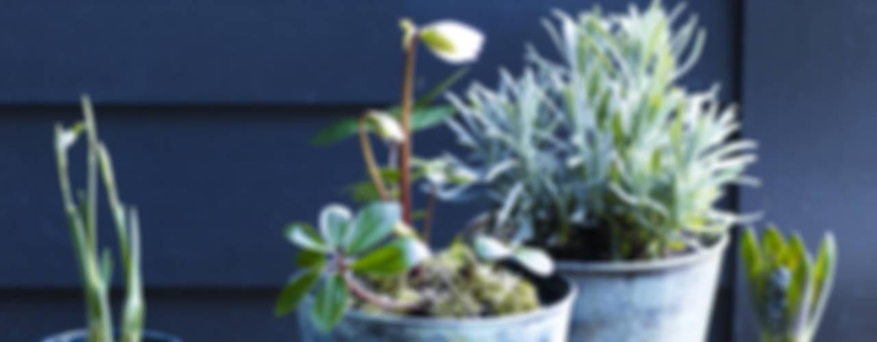 Brent Verdigris Plant Pot: rustic  by Rowen & Wren, Rustic