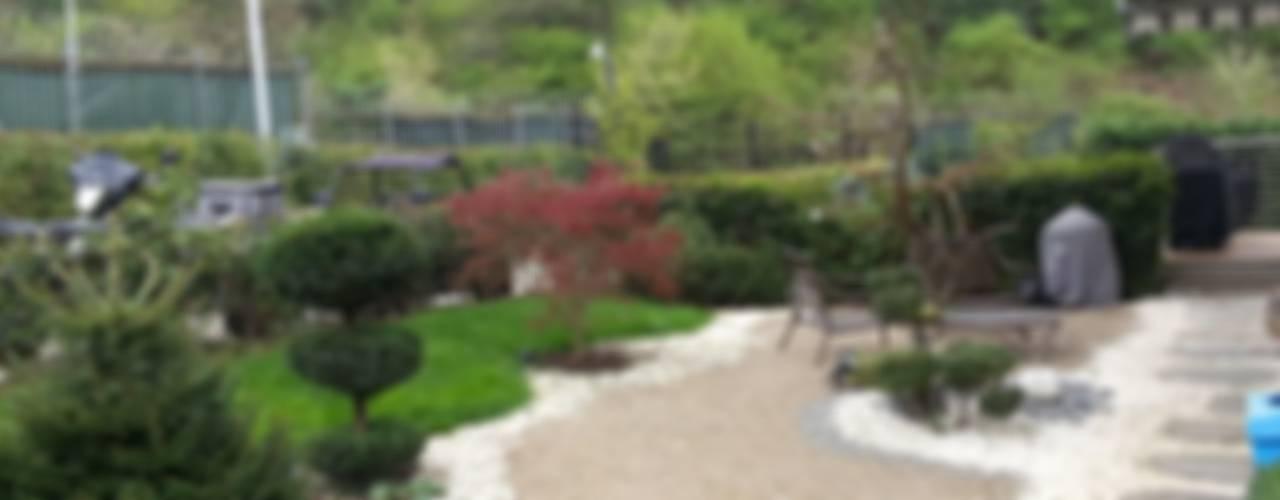 abelia'dan karler Modern Bahçe abelia peyzaj Modern