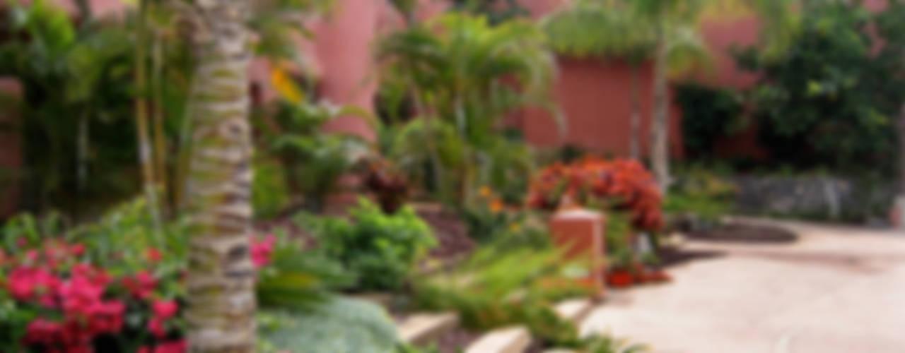 Tropical style garden by Estudio de paisajismo 2R PAISAJE Tropical