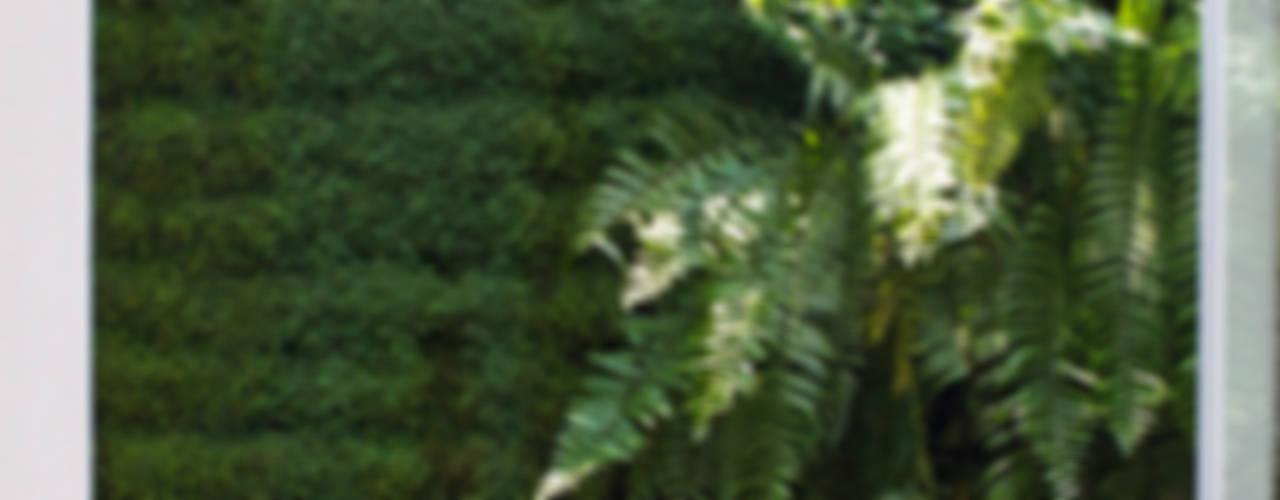 モダンな庭 の DF ARQUITECTOS モダン