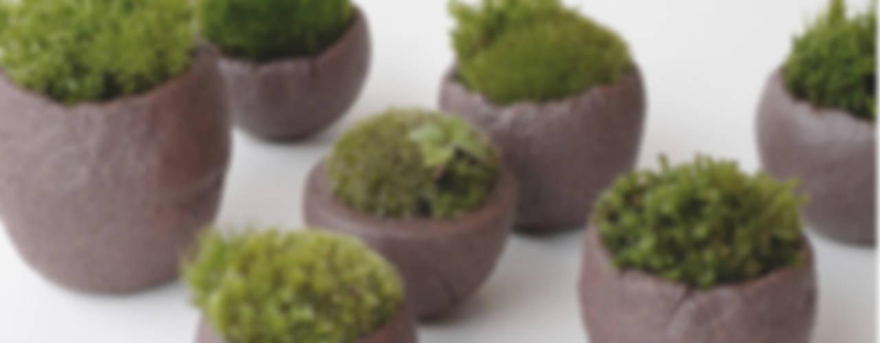 信楽焼と緑のデザイン: 篠田 望デザイン一級建築士事務所が手掛けた素朴なです。,ラスティック