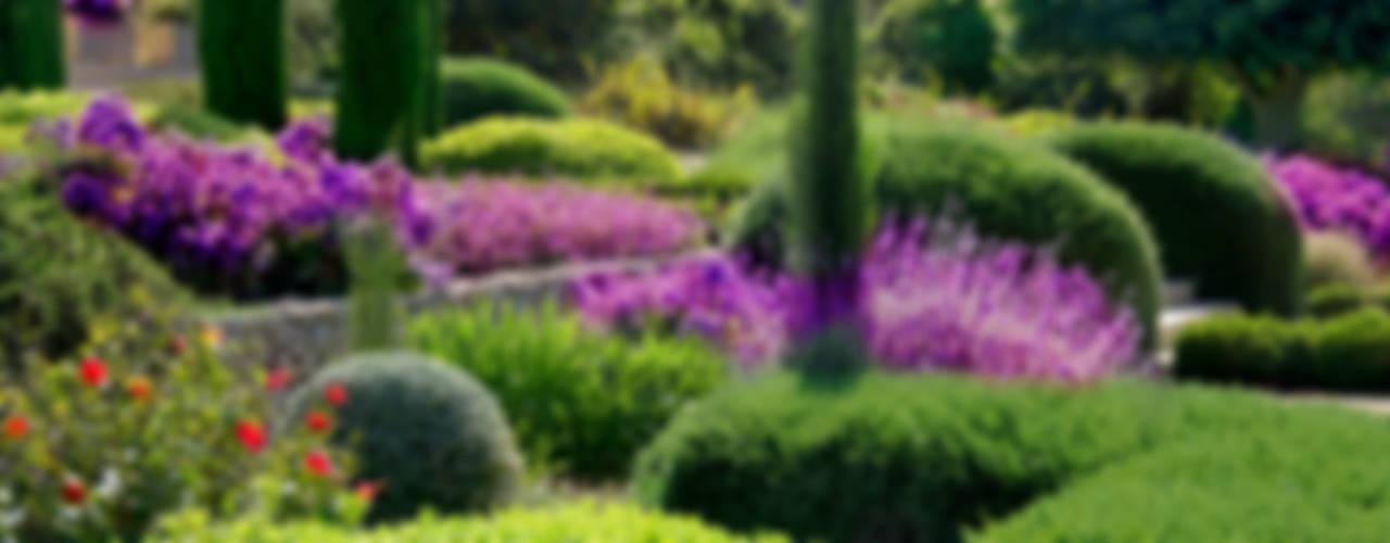 Сады в . Автор – Viveros Pou Nou, Средиземноморский