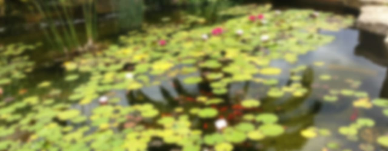 Jardines Mediterráneos Jardines de estilo mediterráneo de Viveros Pou Nou Mediterráneo