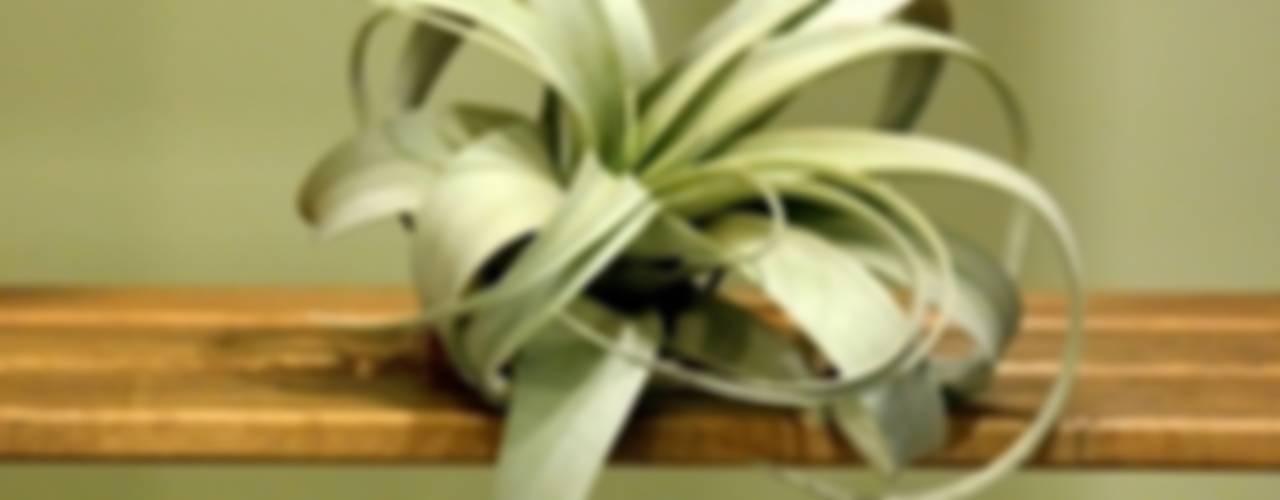 de style  par bitki dekor,