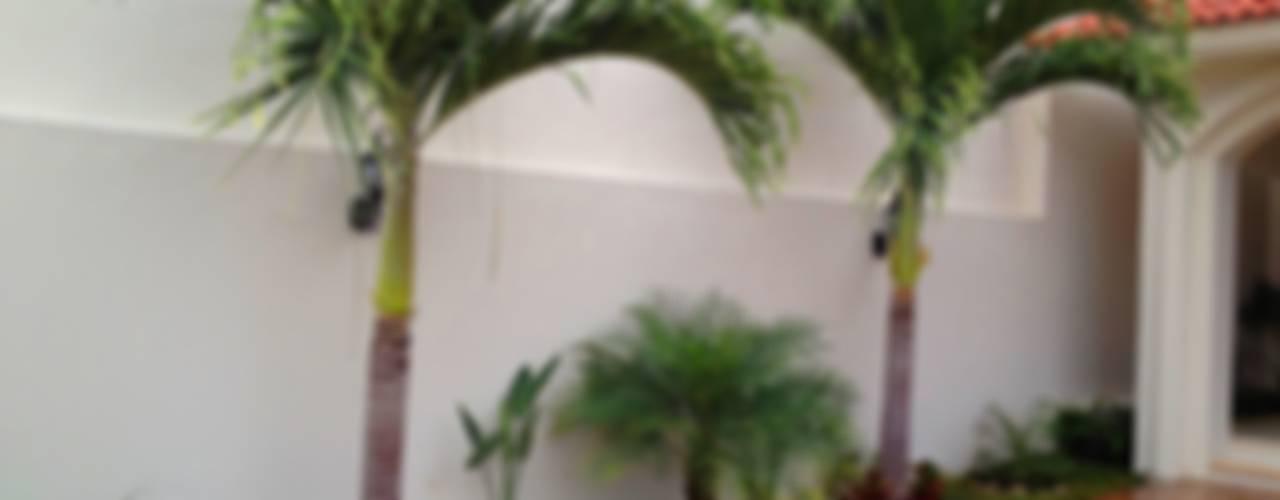 Jardines con palmeras ideas y ejemplos for Arbolitos para jardines pequenos