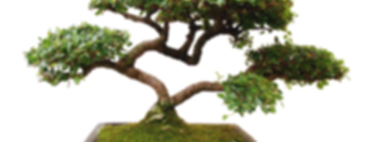 Bonsai Modern garden by Genki-Bonsai Modern
