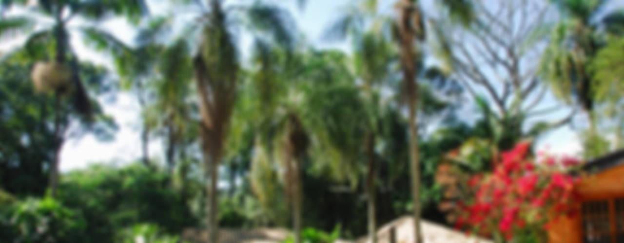 CASA ILHA DE IRAKLIA – PAISAGISMO Jardins tropicais por Eduardo Novaes Arquitetura e Urbanismo Ltda. Tropical