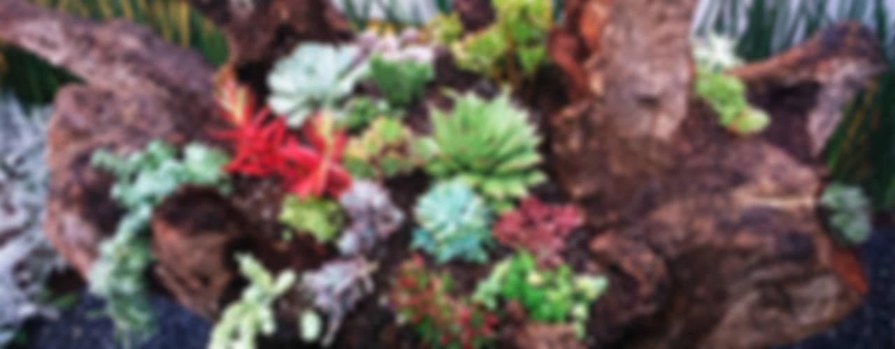 Rustic style garden by Conexion Rustic