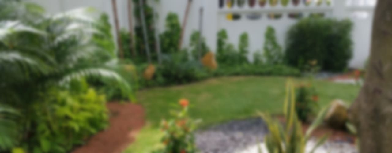 Jardines tropicales de homify Tropical