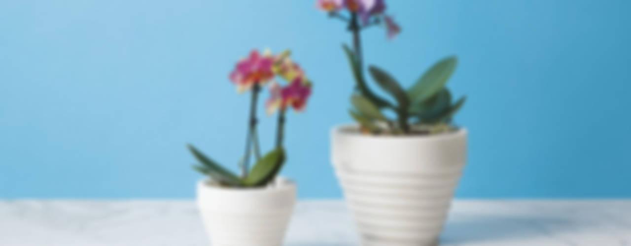 MMAIRO大理石飾品意大利品牌,時尚工藝設計_意大利之家 根據 北京恒邦信大国际贸易有限公司