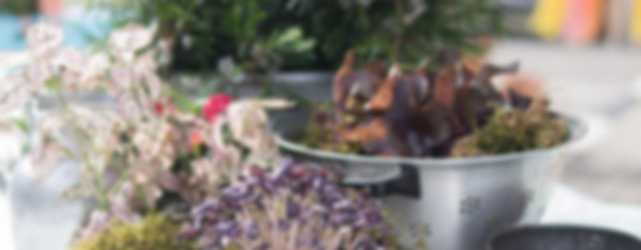 www.rocio-olmo.com Balcones, porches y terrazasPlantas y flores