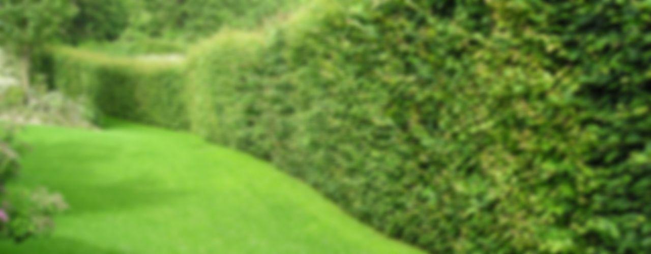 Studio Green Design Jardines modernos: Ideas, imágenes y decoración
